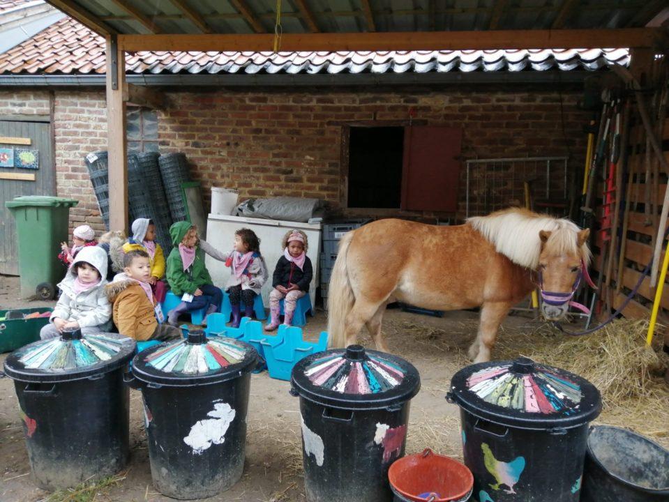 La ferme: brosser le poney.