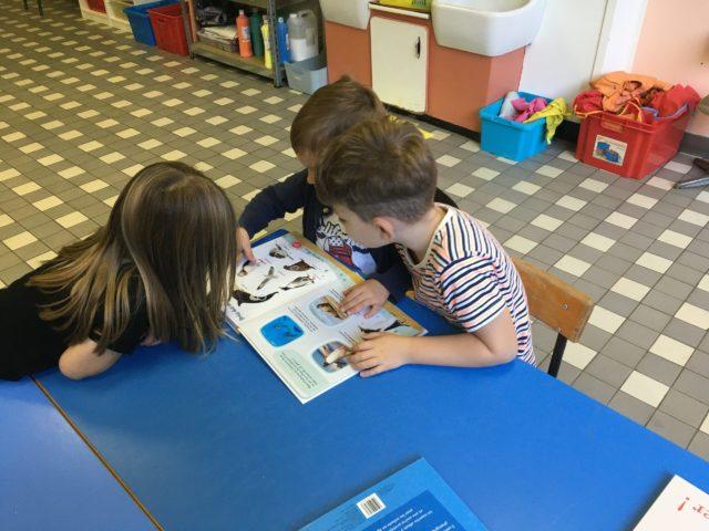 Activité en classe: découverte des nouveaux livres.