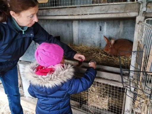 Excursion: nourrir les lapins de la ferme.