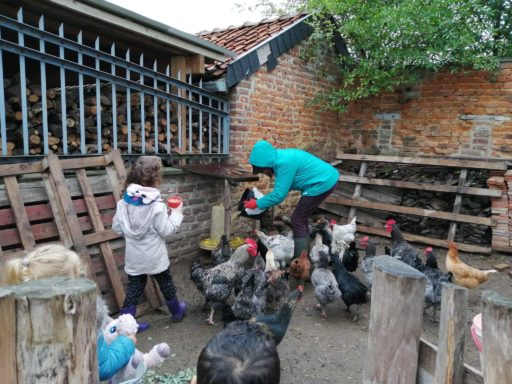 Excursion: nourrir les poules